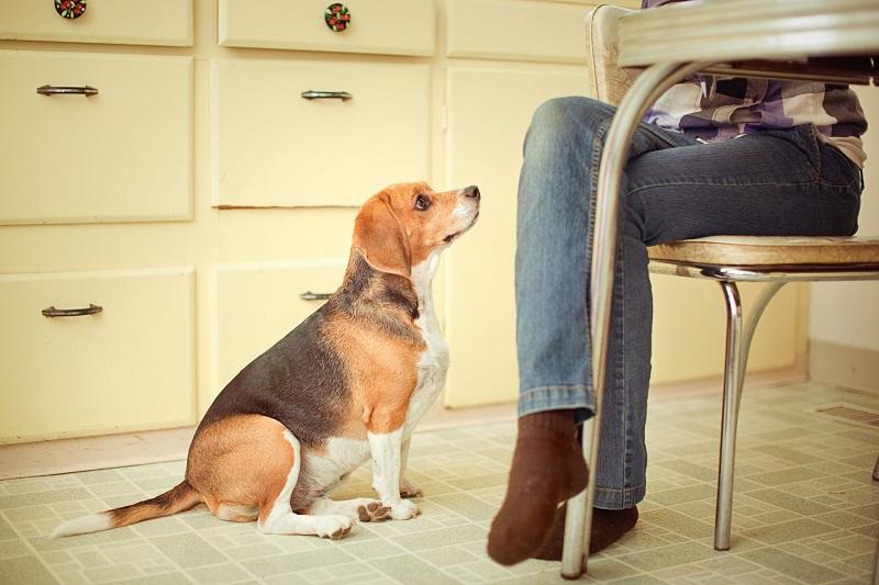 Woofland - Όταν ο σκύλος γίνεται η σκιά μου Αστείες φωτογραφίες σκύλων - Γουφαμάρες 2