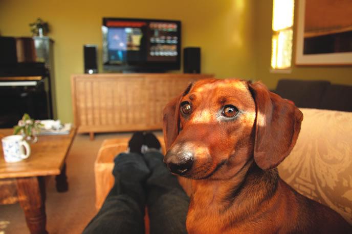 Woofland - Όταν ο σκύλος γίνεται η σκιά μου Αστείες φωτογραφίες σκύλων - Γουφαμάρες4