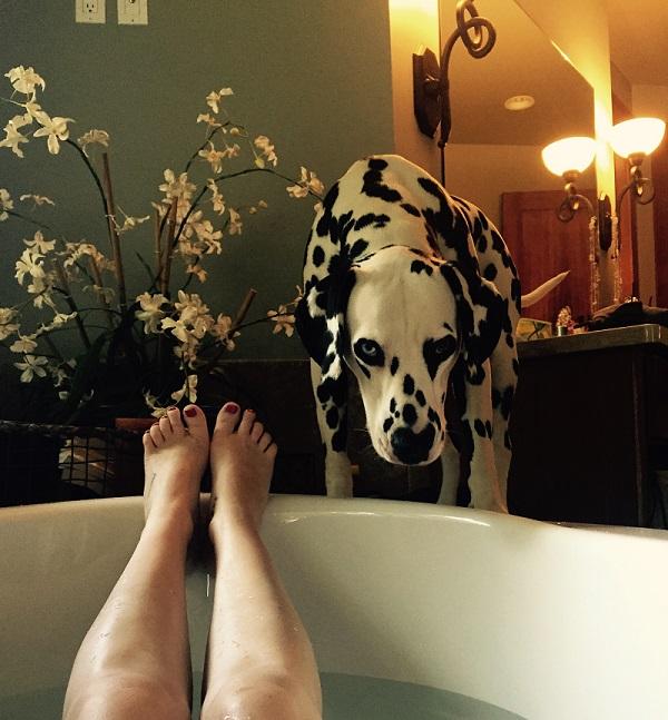 Woofland - Όταν ο σκύλος γίνεται η σκιά μου Αστείες φωτογραφίες σκύλων - Γουφαμάρες 5