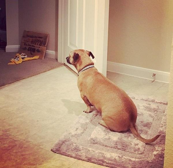 Woofland - Όταν ο σκύλος γίνεται η σκιά μου Αστείες φωτογραφίες σκύλων - Γουφαμάρες 9