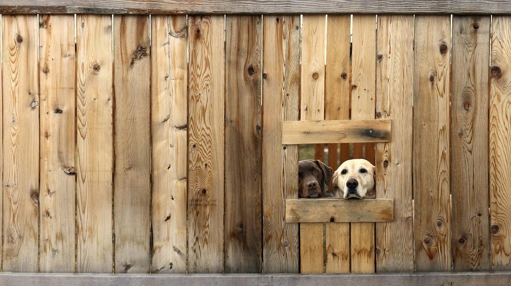 Έχεις γίνει η σκιά μου Αστείες φωτογραφίες σκύλων – Woofland