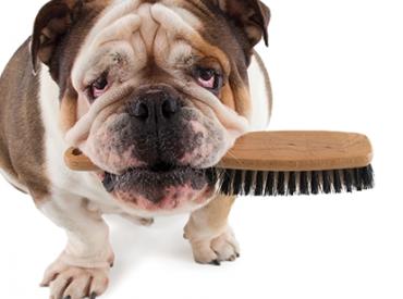 Απομακρύνω ξένα σώματα από το τρίχωμα του σκύλου – Woofland