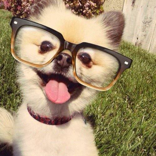 Woofland - Αστείες φωτογραφίες σκύλων με γυαλιά - Γουφαμάρες 1