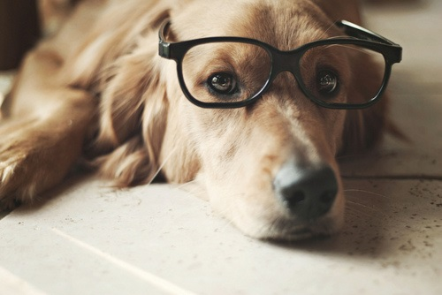 Woofland - Αστείες φωτογραφίες σκύλων με γυαλιά - Γουφαμάρες 10