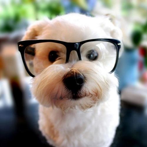 Woofland - Αστείες φωτογραφίες σκύλων με γυαλιά - Γουφαμάρες 2