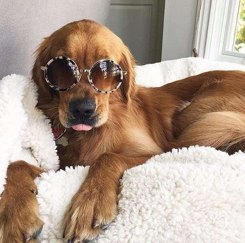Woofland - Αστείες φωτογραφίες σκύλων με γυαλιά - Γουφαμάρες 3