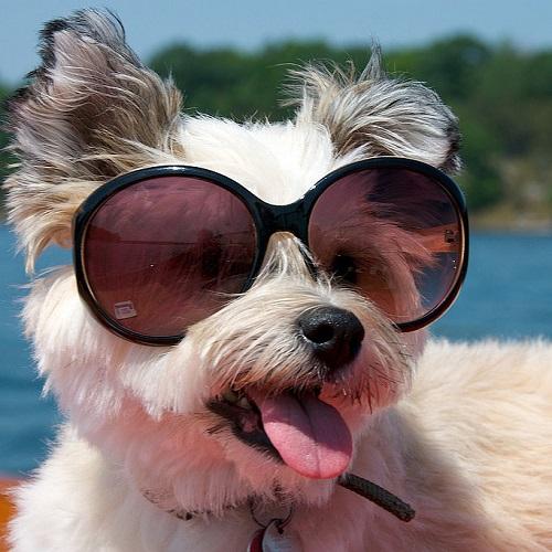 Woofland - Αστείες φωτογραφίες σκύλων με γυαλιά - Γουφαμάρες 5