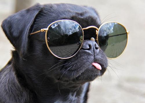 WooflanWoofland - Αστείες φωτογραφίες σκύλων με γυαλιά - Γουφαμάρες 6