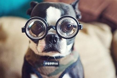 Woofland - Αστείες φωτογραφίες σκύλων με γυαλιά - Γουφαμάρες 7