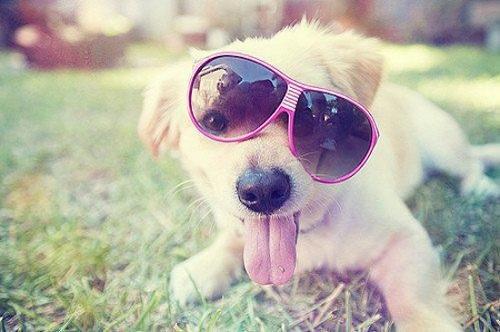 Woofland - Αστείες φωτογραφίες σκύλων με γυαλιά - Γουφαμάρες 8