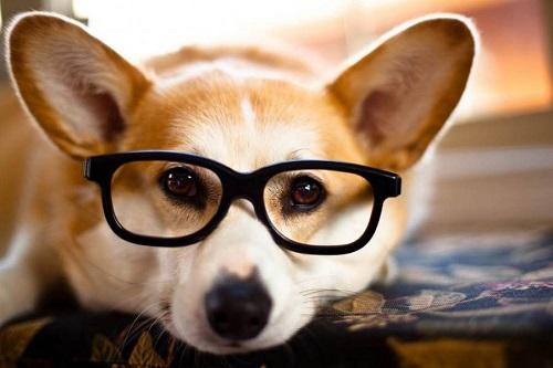 Woofland - Αστείες φωτογραφίες σκύλων με γυαλιά - Γουφαμάρες 9