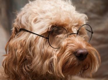 Αστείες φωτογραφίες σκύλων με γυαλιά – Γουφαμάρες – Woofland