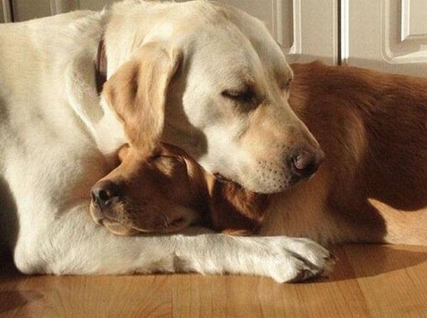 Woofland - Αστείες φωτογραφίες ερωτευμένων σκύλων - Γουφαμάρες 5