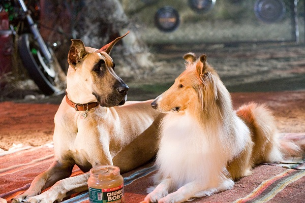 Woofland - Αστείες φωτογραφίες ερωτευμένων σκύλων - Γουφαμάρες 6