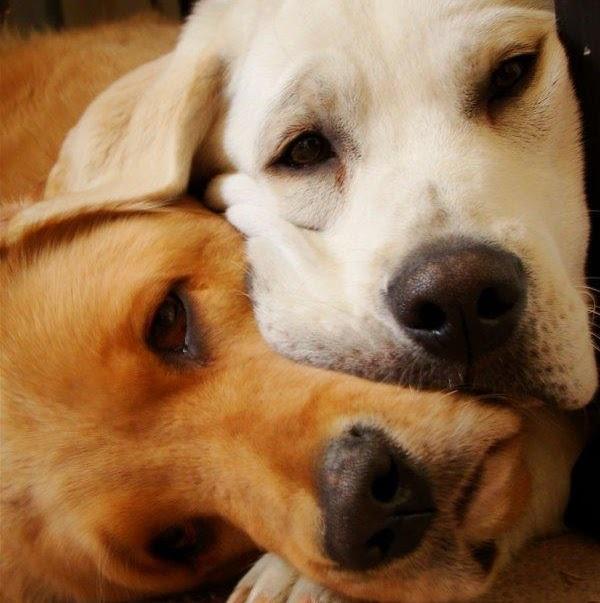 Αστείες φωτογραφίες ερωτευμένων σκύλων – Γουφαμάρες Woofland