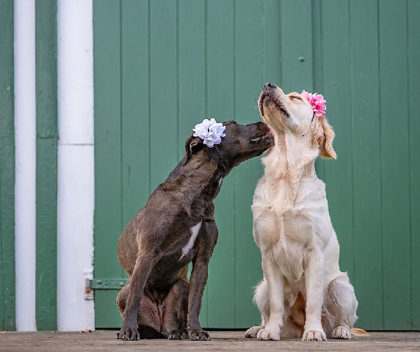 Woofland - Αστείες φωτογραφίες σκύλων ζευγαριών - Γουφαμάρες 1