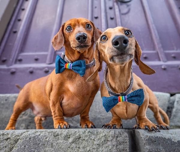 Woofland - Αστείες φωτογραφίες σκύλων ζευγαριών - Γουφαμάρες 2