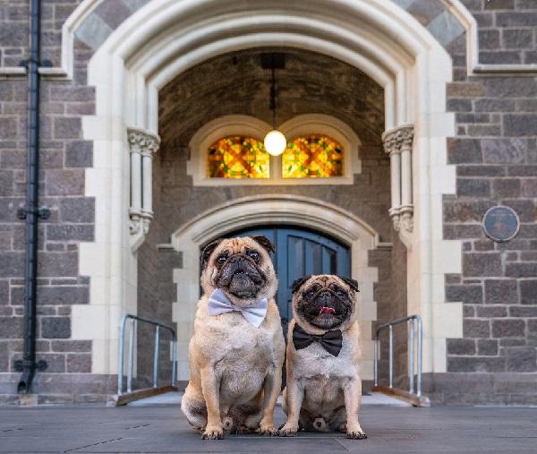 Woofland - Αστείες φωτογραφίες σκύλων ζευγαριών - Γουφαμάρες 4