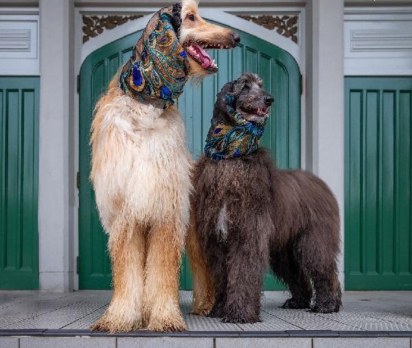 Woofland - Αστείες φωτογραφίες σκύλων ζευγαριών - Γουφαμάρες 5