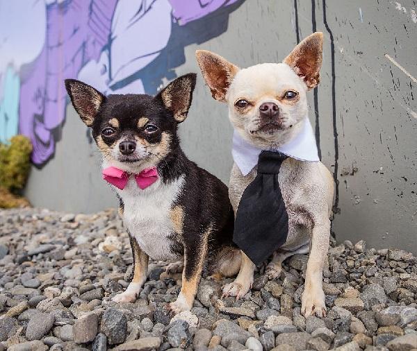 Woofland - Αστείες φωτογραφίες σκύλων ζευγαριών - Γουφαμάρες 6