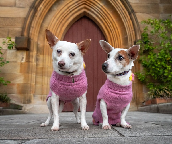Woofland - Αστείες φωτογραφίες σκύλων ζευγαριών - Γουφαμάρες 7