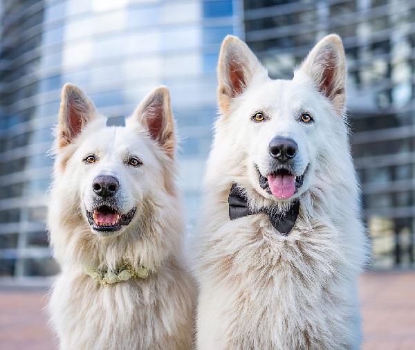 Woofland - Αστείες φωτογραφίες σκύλων ζευγαριών - Γουφαμάρες