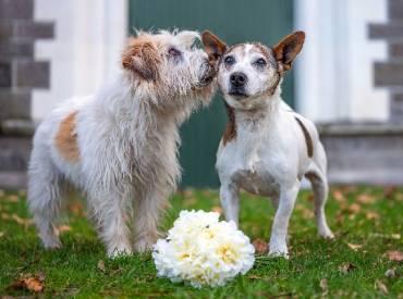 Αστείες φωτογραφίες σκύλων ζευγαριών – Γουφαμάρες Woofland