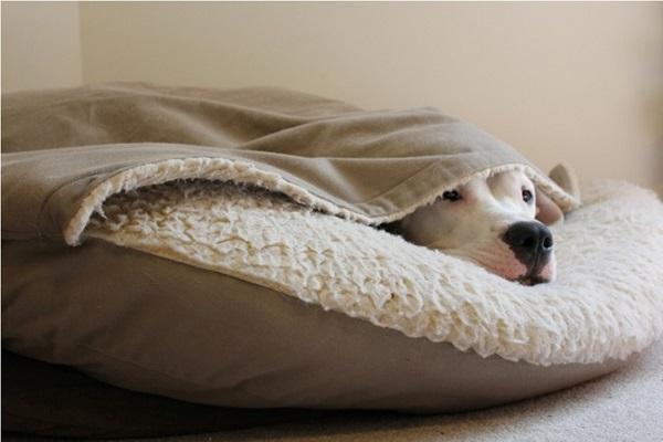 Woofland - Αστείες φωτογραφίες σκύλων κάτω από τις κουβέρτες - Γουφαμάρες 9