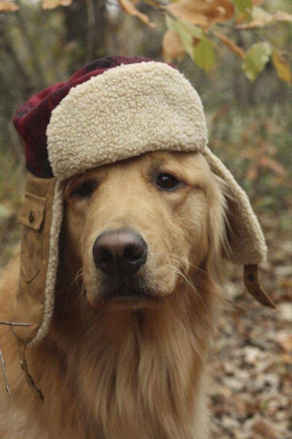 Woofland - Αστείες φωτογραφίες σκύλων με καπέλα - Γουφαμάρες 1