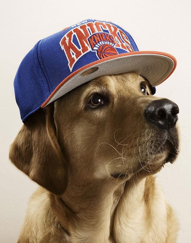 Woofland - Αστείες φωτογραφίες σκύλων με καπέλα - Γουφαμάρες 4