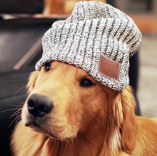 Woofland - Αστείες φωτογραφίες σκύλων με καπέλα - Γουφαμάρες 2