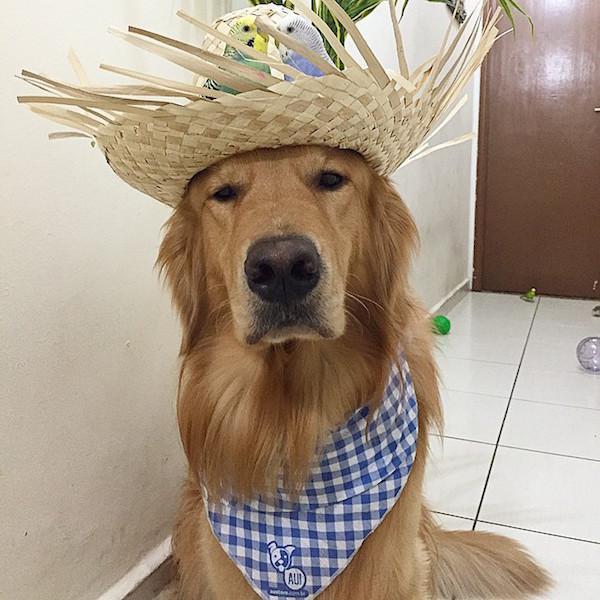 Woofland - Αστείες φωτογραφίες σκύλων με καπέλα - Γουφαμάρες 6