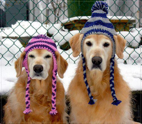 Woofland - Αστείες φωτογραφίες σκύλων με καπέλα - Γουφαμάρες 3