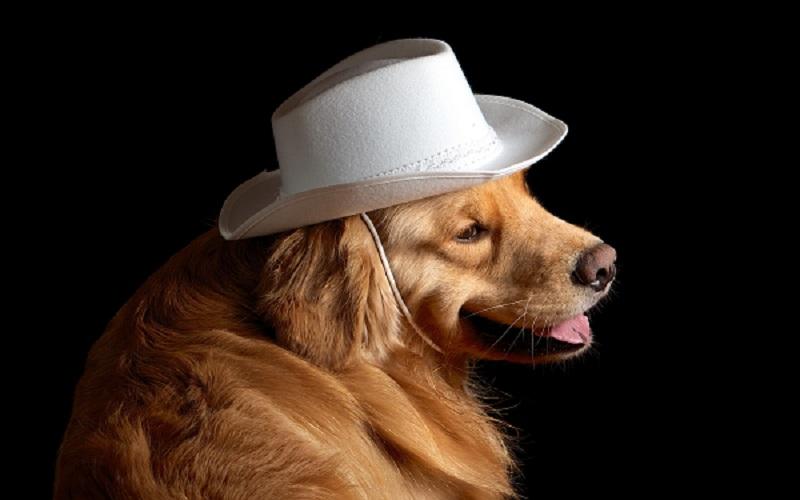 Woofland - Αστείες φωτογραφίες σκύλων με καπέλα - Γουφαμάρες 9