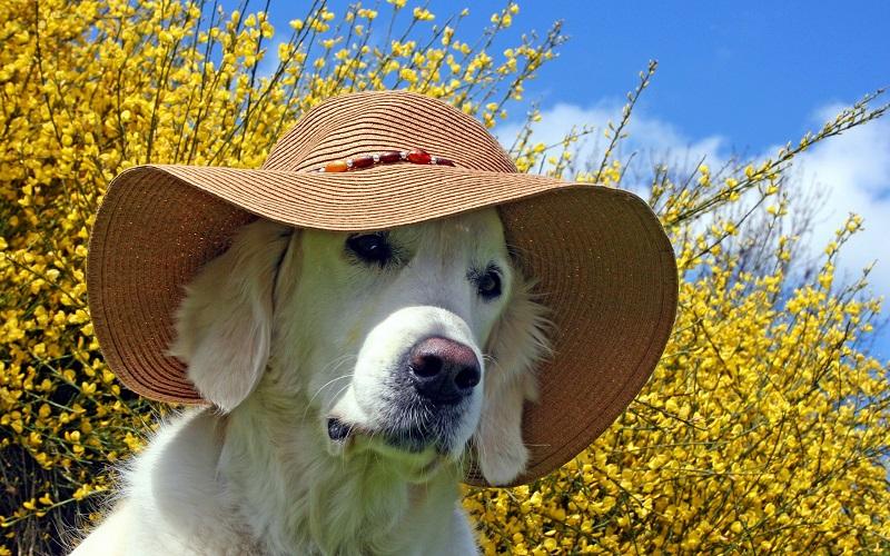Woofland - Αστείες φωτογραφίες σκύλων με καπέλα - Γουφαμάρες 7