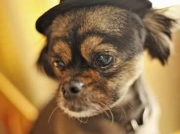 Αστείες φωτογραφίες σκύλων με καπέλα Γουφαμάρες – Woofland
