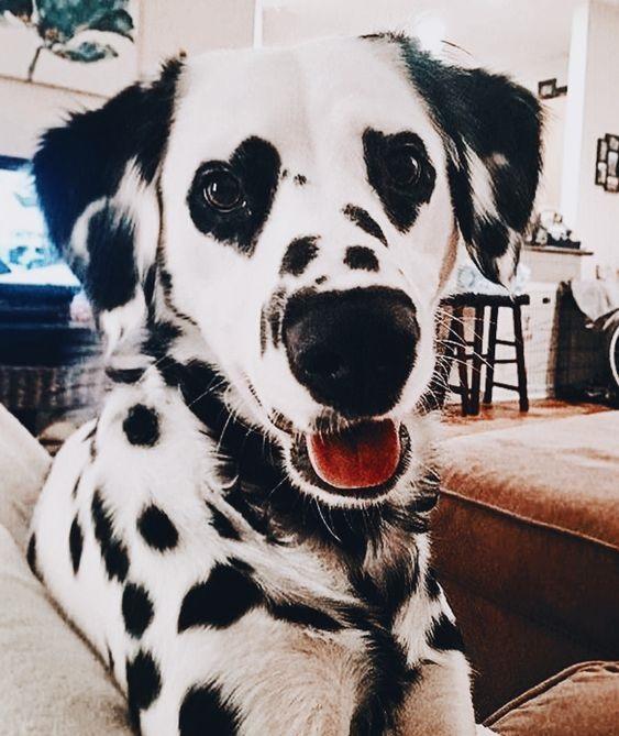 Woofland - Αστείες φωτογραφίες σκύλων με καρδιά - Γουφαμάρες 1