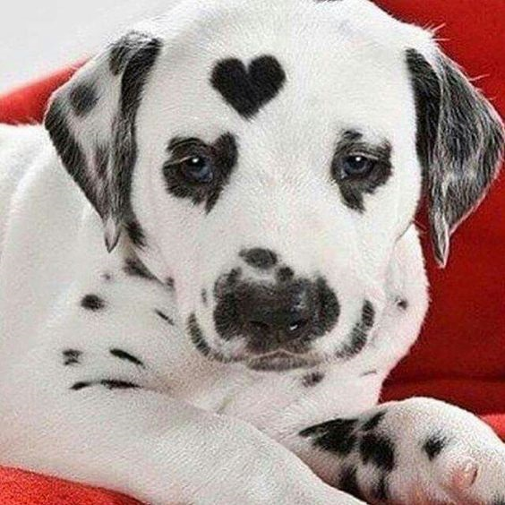 Woofland - Αστείες φωτογραφίες σκύλων με καρδιά - Γουφαμάρες 3