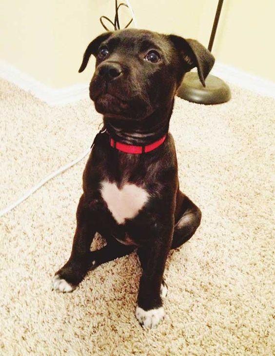 Woofland - Αστείες φωτογραφίες σκύλων με καρδιά - Γουφαμάρες 7