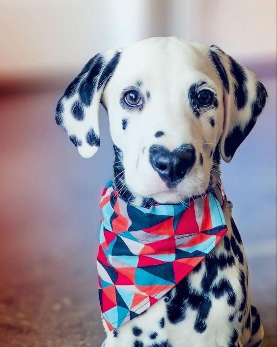 Αστείες φωτογραφίες σκύλων με καρδιά – Γουφαμάρες – Woofland