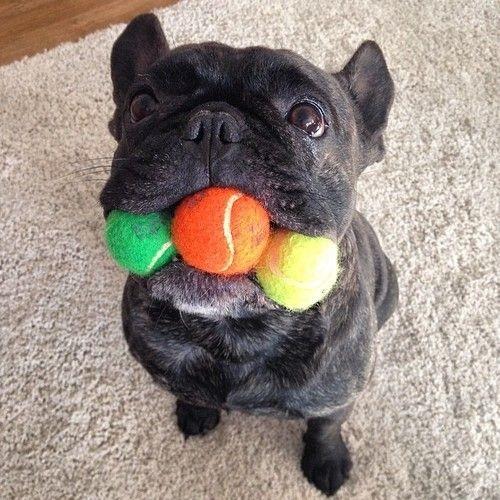 Woofland - Αστείες φωτογραφίες σκύλων με μπαλάκια - Γουφαμάρες 1