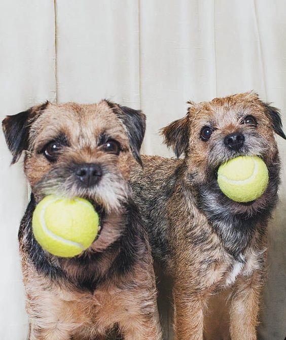 Woofland - Αστείες φωτογραφίες σκύλων με μπαλάκια - Γουφαμάρες 2