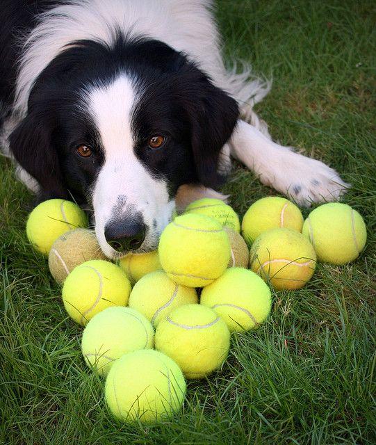 Woofland - Αστείες φωτογραφίες σκύλων με μπαλάκια - Γουφαμάρες 4