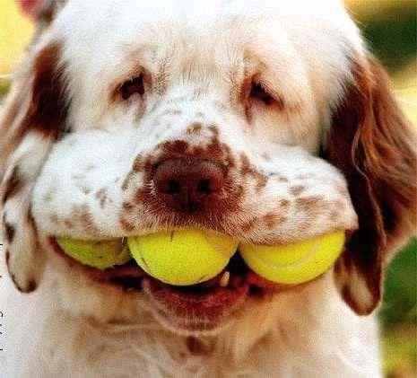 Woofland - Αστείες φωτογραφίες σκύλων με μπαλάκια - Γουφαμάρες 5