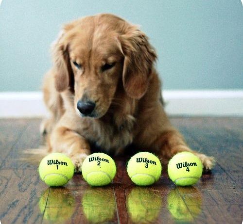 Woofland - Αστείες φωτογραφίες σκύλων με μπαλάκια - Γουφαμάρες 6