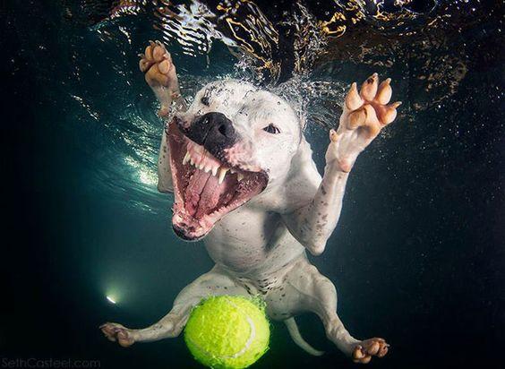 Woofland - Αστείες φωτογραφίες σκύλων με μπαλάκια - Γουφαμάρες 7