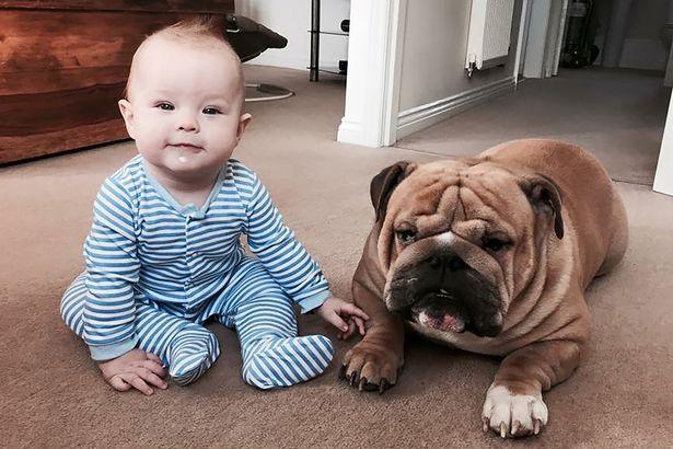 Woofland - Αστείες φωτογραφίες σκύλων με τα αδέρφια τους - Γουφαμάρες 1