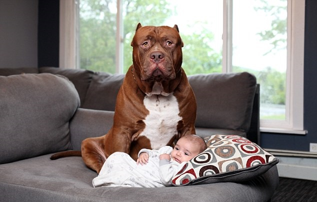 Woofland - Αστείες φωτογραφίες σκύλων με τα αδέρφια τους - Γουφαμάρες 2
