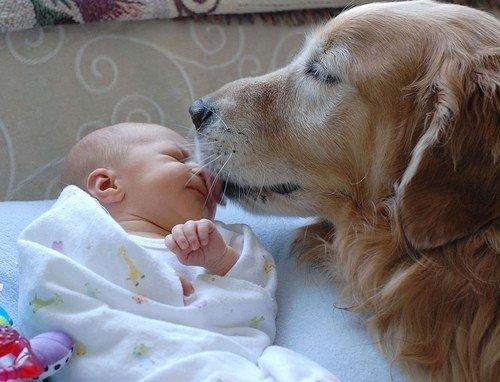 Woofland - Αστείες φωτογραφίες σκύλων με τα αδέρφια τους - Γουφαμάρες 5