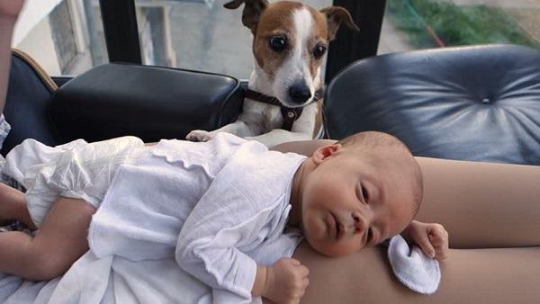 Woofland - Αστείες φωτογραφίες σκύλων με τα αδέρφια τους - Γουφαμάρες 6